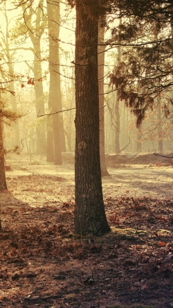 forest trees grass morning light