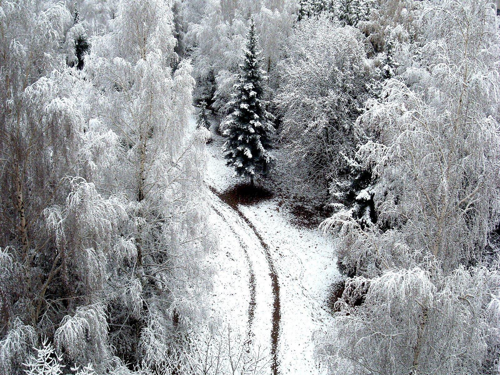 Winter Wallpaper (153) - Wallect