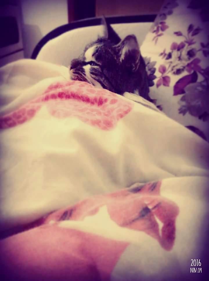 kedi (3) - ryuklemobi