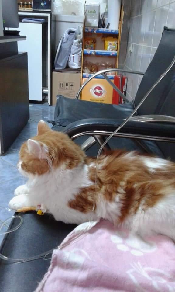 kedi (8) - ryuklemobi