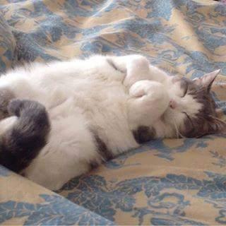 cat1 (3) - ryuklemobi