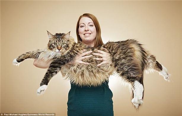 dünyanın en uzun kedisi .