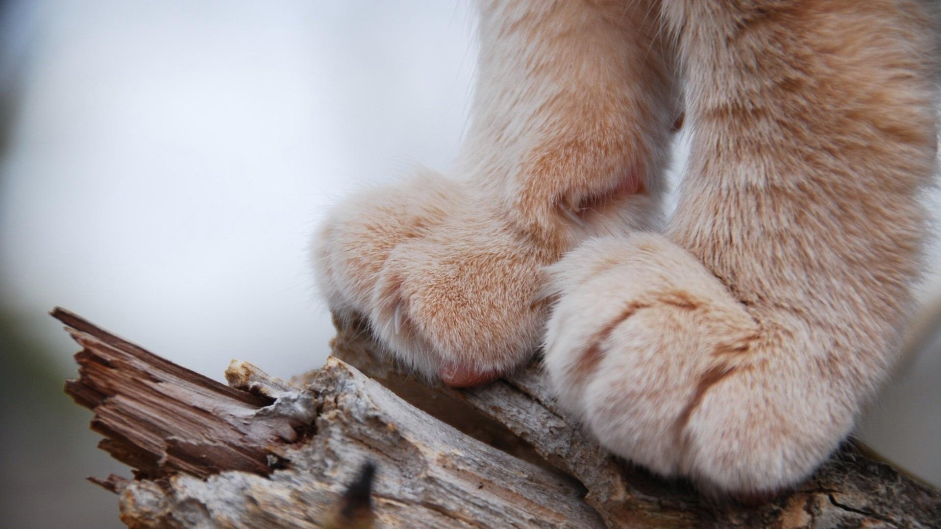 cat spaw close-up