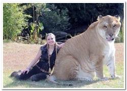 aslan gibi aslan