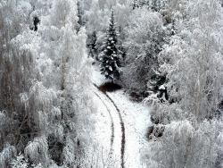 Winter Wallpaper (153)