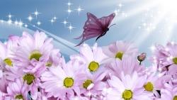 summer flowers butterflover