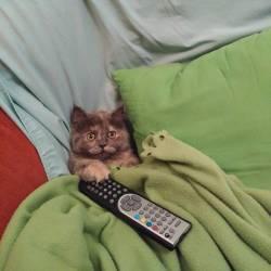 kedi (11)