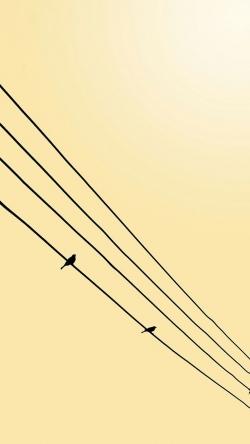 birds telegraph ways
